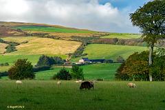 Kintyre Landscape, HFF