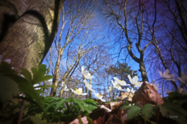 Forest Pinhole #2