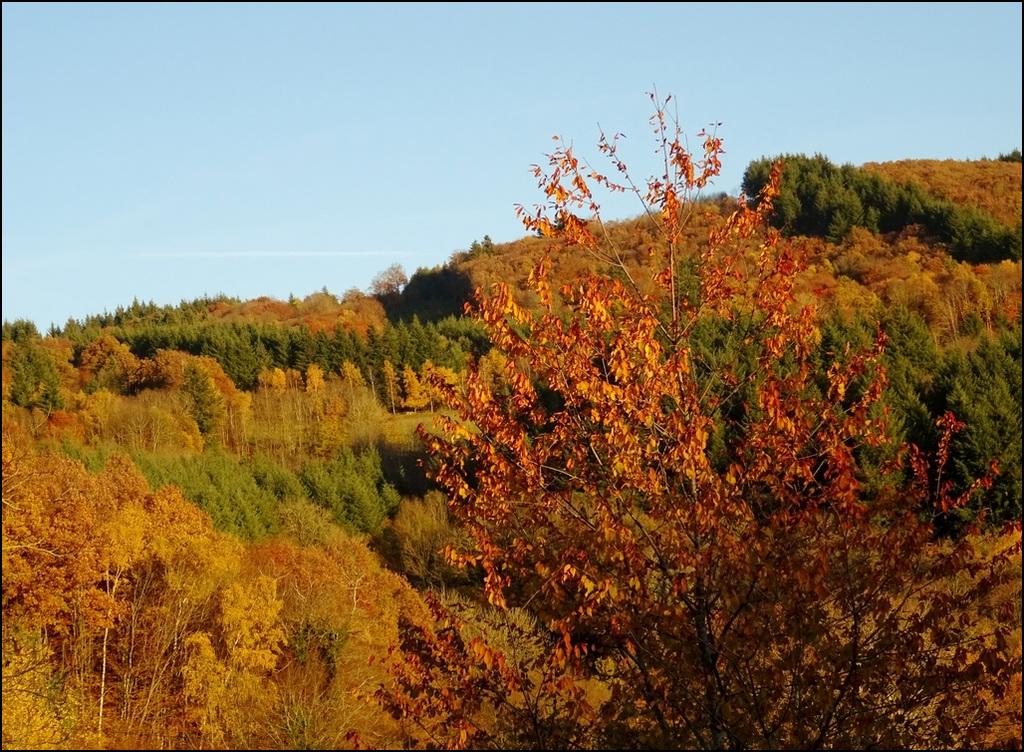 L'automne enchanté au bout de mon pré