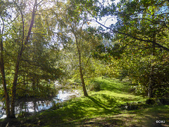 Sunny Autumn Monday - colours by the pond
