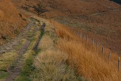 Ginger coloured grasses