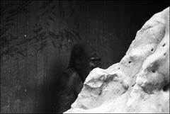 Gorilla - 2014