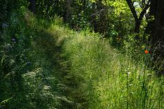 Ein idyllischer Wanderweg - An idyllic hiking trail