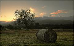 Sunrise Libanus Common