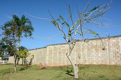 Dominican Republic, The Calabash Tree