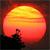 TOP SUN (+100 FAVES )