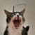 Les chats dans tous leurs états d'âmes