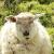 Tiergespräche - Animal language