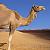 wandelreiziger Marokko 2011