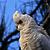Wild Parrots & Cockatoos