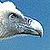 vautours et autres rapaces