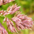 Grasses (graminées) and Flowers (fleurs)