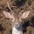 Wild Deer UK