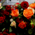 Roses, candles and comfort after terror