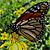 Butterflies ƸӜƷ Moths ƸӜƷ Caterpillars ~~~o