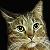 gtncats