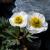 Flora von Südtirol