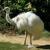 All animals of creation -PHOTOS et ART DIGITAL