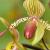 Flore (jardin botanique)