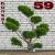 bonsai59