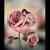 rosefitz