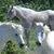 Horses / Chevaux / Caballos / Pferd