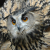 Owls and Birds of Prey UK