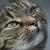 Cats ★ des chats ★ Katzen ★ gatti ★ Gatos★ Katoj