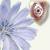 Amazing Details & Orchidarium Admin.
