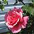 Adler55 Blume