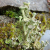 Nature of Lichens and Mosses