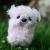 puppytigerdragon