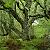 feeriesforest