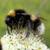 Michael Bumblebee