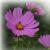 Fleurs et plantes du monde