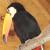 Birds - All Birds - Only Birds