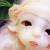 Mouse Love (bj tales bjd mouse)