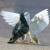 Pigeons - Περιστέρια - Κοlomboj
