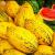 Frutas Y Verduras - Früchte & Gemüse -Fruits & Vegetables