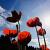 Jardinier, fleurs et photographie