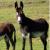 papy el burro