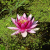#☺Fleurs ROSES / PINK flowers !☺#
