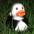 Quietscheentchen / rubber ducks
