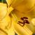 Κίτρινα Άνθη - Yellow Flowers