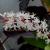 Blumen-Pflanzen-Natur