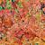 """ - Blätter und Laub - Feuilles et feuillage -Leaves and foliage - """