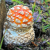 """"""" Mushrooms - Lichen / Champignons - Lichen / Pilze - Flechten """""""