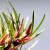 """Flo.Fam.: Poaceae , cyperaceae, joncaceae, """"herbes , graminées, grasses , Gräser , Césped ...,"""